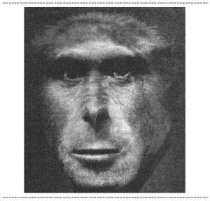 Ape Shekaf Zehn