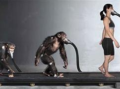 Human Chimp